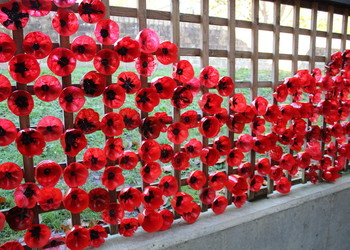 Series of events across VIAT schools to commemorate Remembrance Day